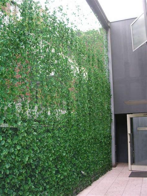 idees brise vue vegetal cachez au naturel mur