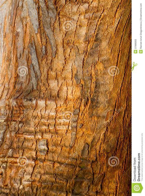 bark texture stock image image  damaged fabric