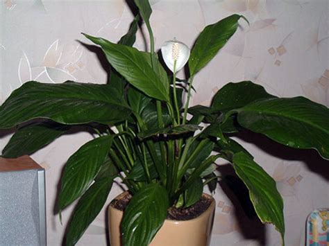 Houseplants by Yesterday Today Tomorrow Top 10 Indoor Plants