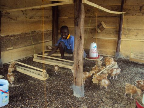 Shed Layout Plans by Inside Kasese Chicken Coop 187 Humanist Community At Rutgers