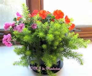 indoor flowering plants elegant survival news