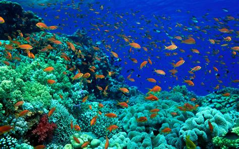Fish Pictures Ocean Wallpapers Chapter 1 Hd Animal Wallpapers
