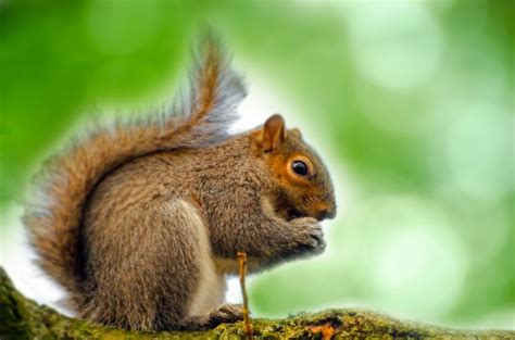 Jp Wallpaper Pohon squirrel sitting on the branch free stock photo