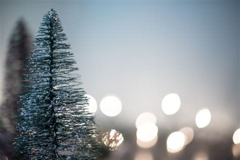 Free Images Branch Snow Cold Winter Light Blur Blue Light Tree