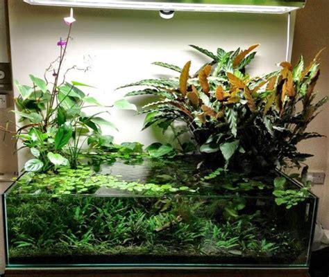 aquarium design in bangladesh 702 best aquarium images on pinterest fish tanks