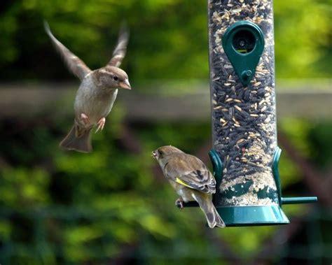dealing with birdfeeder bullies thriftyfun