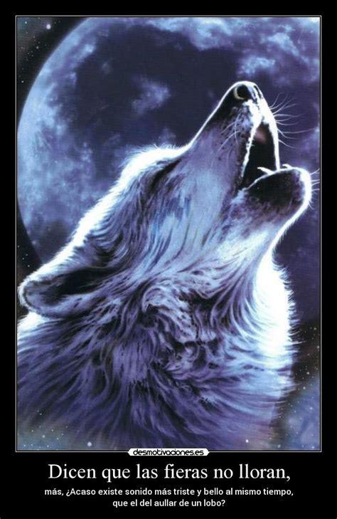 imagenes de lobos tristes dicen que las fieras no lloran desmotivaciones