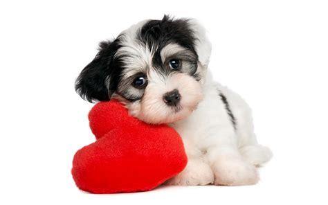 imagenes de animales gratis fondos de pantalla de perros wallpapers hd