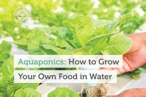grow your own hrt sprout hormone rich greens in only two minutes a day books aquaponics how to grow your own food in water global