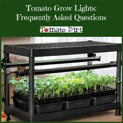 fluorescent light for seedlings tomato grow lights for seedlings frequently asked questions