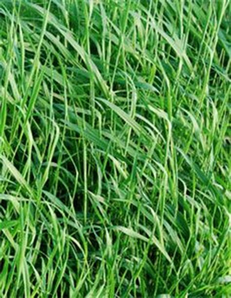 Killing Grass by How To Kill Grass Naturally Kill Grass In Your