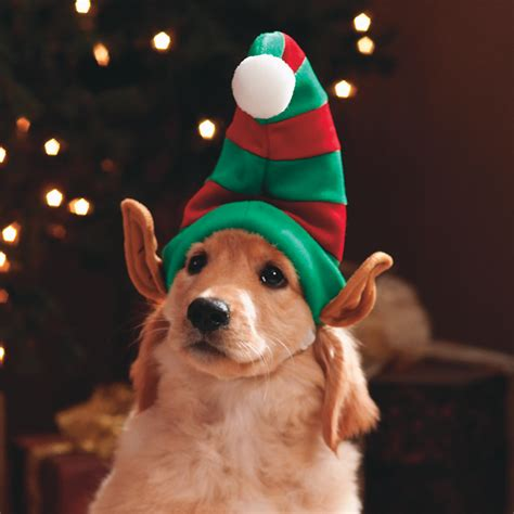 do dogs remember their puppies get clothing ready for wishforpets