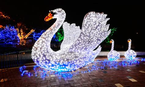 lights of the world groupon saint louis zoo in st louis mo groupon
