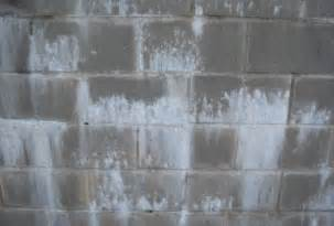 white basement mold white mold in basement types health risks removal