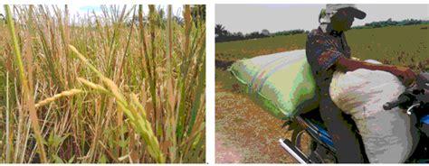 Harga Ton Nasa 3 Kg dinas pertanian kabupaten asahan