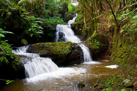 hilo botanical gardens onomea falls at hawaii tropical botanical garden hilo