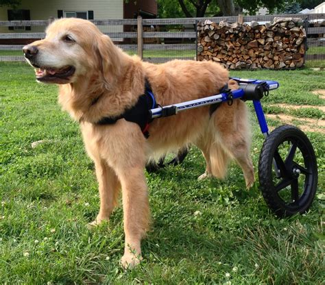 wheelchairs for dogs handicapped pets a wheelchair from rainbow bridge