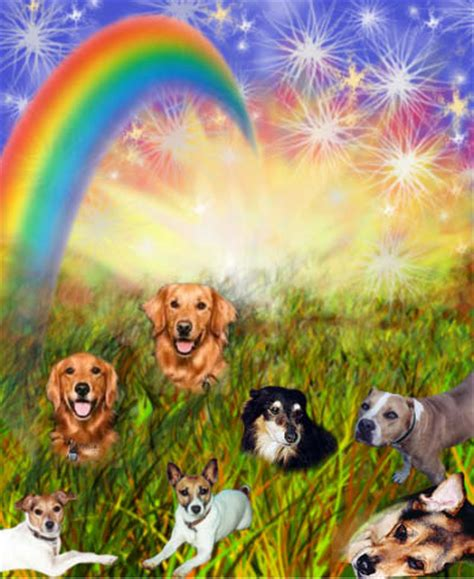 my pet connection inspirational tails of adoption books rainbow bridge