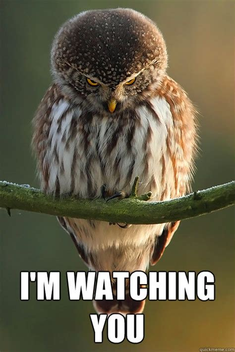 Im Watching You Meme - i m watching you stalker owl quickmeme