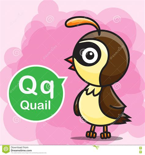 Character With Letter Q quail bird character vector vector cartoondealer