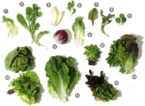 types of salad greens newhairstylesformen2014 com