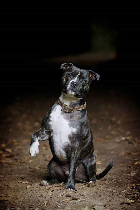 dog photo gallery mans  friend