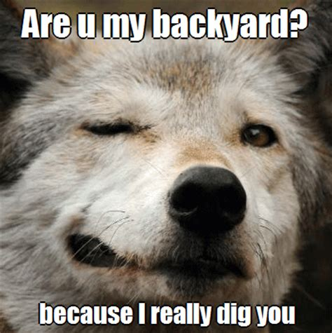 Meme Wolf - funny wolf meme www pixshark com images galleries with