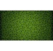 Green Leaves Texture Background  HD Wallpaper Download