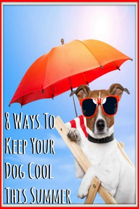 how to keep dogs cool in summer 8 ways to keep your cool this summer need to