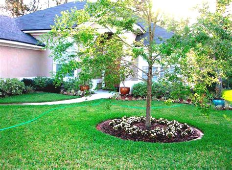 Tree Ideas For Backyard Small Front Yard Tree Www Pixshark Images Galleries With A Bite