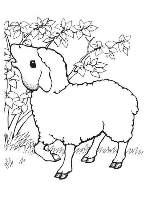 coloring pages of sheep dogs free sheep year coloring pages