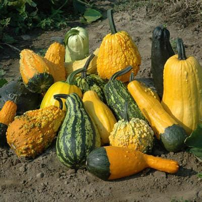gourd lunch lady harris seeds