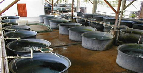 design of fishways and other fish facilities books facilities