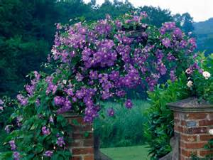 Best Climbing Plants - guide to climbing clematis plants hgtv