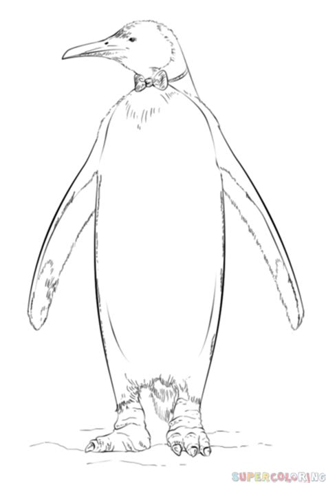 realistic penguin coloring page how to draw a king penguin step by step drawing tutorials