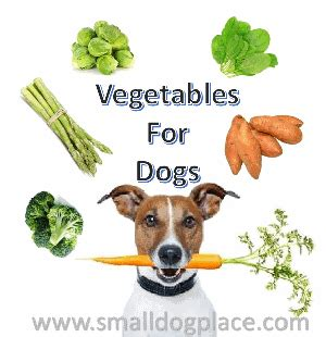 fruits for dogs fruits and vegetables for dogs the top 17