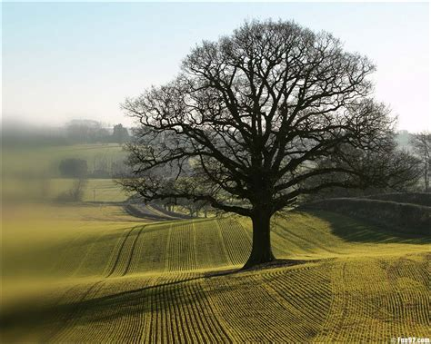 only nature beautiful tree wallpapers natural beauty pictures hd wallpapers