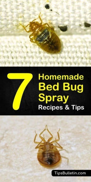 rid  bed bugs  homemade bed bug spray recipes  tips life hacks bed bug spray