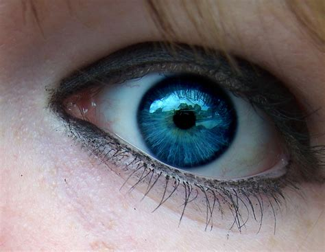 film blue eyes brown eyes tudo sobre sombras e combina 231 245 es dash of wonder