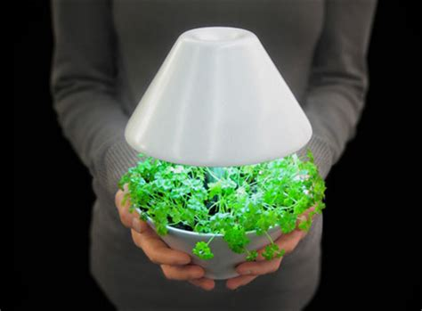 growing herbs indoors under lights modern and creative plant pot designs