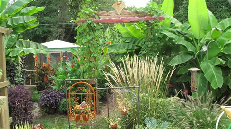 Bill's tropical garden in Ohio   Fine Gardening