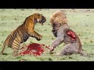 Jaguar Vs Hyena Amzing Leopard Vs Eagle 3 Vs Leopard Baboons Vs
