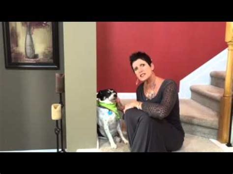 the best dog house ever for the best dog house you will ever buy call judy hicks youtube