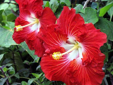 fiori particolari da giardino piante fiorite giardinaggio piante e arbusti fiori