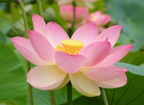 10 interesting flower facts my interesting facts
