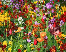 Garden Plants And Flowers Growing The Best Flowers In Town Landscaping Gardening Ideas