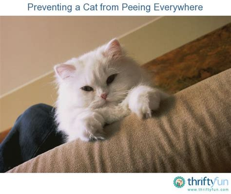 stop cat from peeing on couch preventing a cat from peeing everywhere cats the o jays