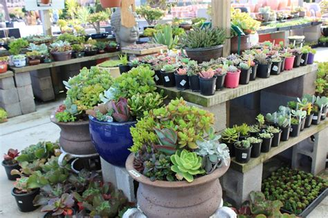 succulents in melbourne victoria pots galore