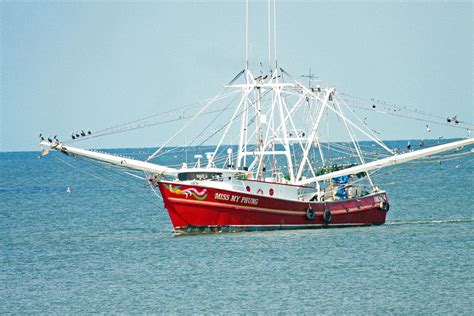 the shrimp boat free photo shrimp boat fishing boat boat free image