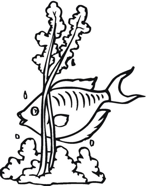 free coloring pages of seaweed